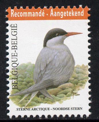 Belgium 2010-14 Birds - Arctic Tern 5.03 Euro unmounted mint