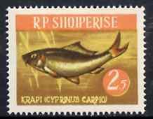 Albania 1964 Carp 2L50 unmounted mint, Mi 812