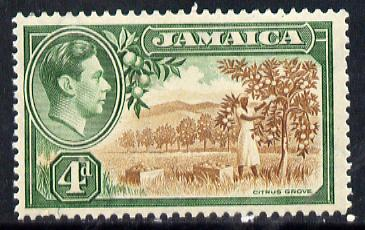 Jamaica 1938-52 KG6 Citrus Grove 4d brown & green unmounted mint, SG 127