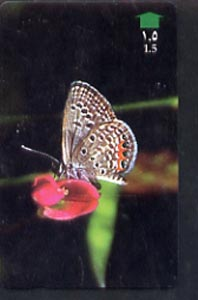 Telephone Card -Oman 1.5r phone card showing Grass Jewel Butterfly