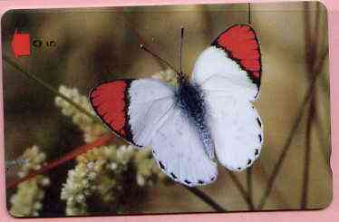 Telephone Card -Oman 5r phone card showing Scarlet Red Tip Butterfly