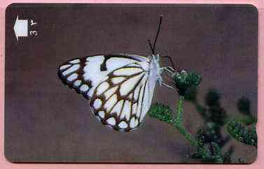 Telephone Card -Oman 3r phone card showing Caper White Butterfly