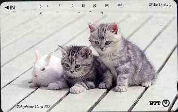 Telephone Card - Japan 105 units phone card showing two Kittens with Rabbit (card dated 1.2.1996)