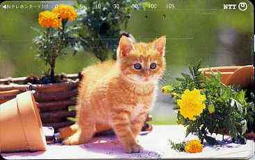 Telephone Card - Japan 105 units phone card showing Kitten amid flower pots (card 231-201)