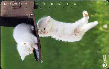 Telephone Card - Japan 105 units phone card showing two white Kittens playing on post box (card 231-243)
