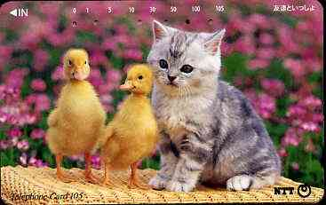 Telephone Card - Japan 105 units phone card showing Kitten with two chicks (card 111-055)