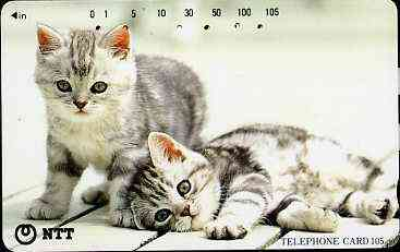 Telephone Card - Japan 105 units phone card showing two grey & white Kittens (one laying down) (card 111-078)