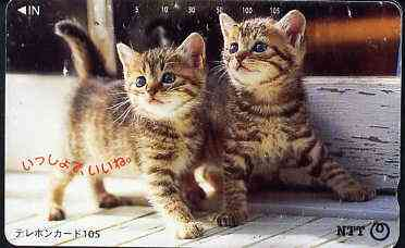 Telephone Card - Japan 105 units phone card showing two Kittens looking up (card 111-028)