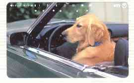 Telephone Card - Japan 105 units phone card showing Golden Retriever in Drivers Seat of Car (card number 331-447)