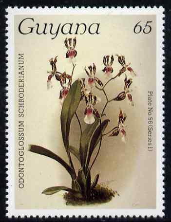 Guyana 1985-89 Orchids Series 1 plate 96 (Sanders' Reichenbachia) 65c unmounted mint, unlisted by SG without surcharge*