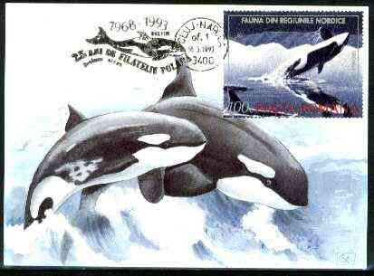 Rumania 1992 Killer Whale 100L (as SG 5485) on maximum card with special illustrated 'Whale' cancellation
