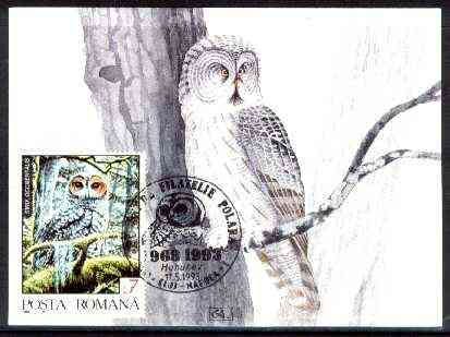 Rumania 1992 Spotted Owl 7L (as SG 5479) on maximum card with special illustrated 'Owl' cancellation