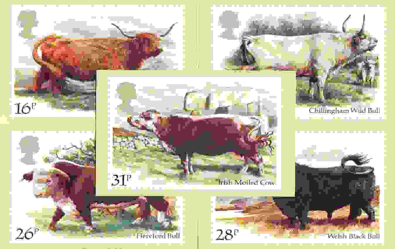 Great Britain 1984 British Cattle set of 5 PHQ cards unused and pristine