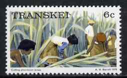Transkei 1976-83 Cutting Phormium tenax 6c (perf 14) from def set unmounted mint, SG 6a