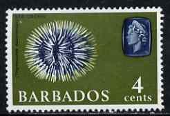 Barbados 1966-69 Sea Urchin 4c (wmk sideways) unmounted mint SG 345
