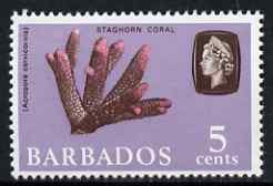 Barbados 1966-69 Staghorn Coral 5c (wmk sideways) unmounted mint SG 346