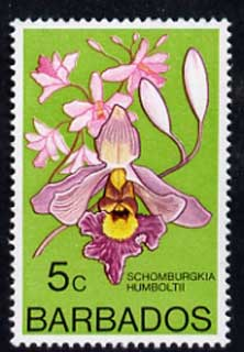 Barbados 1975-79 Schomburgkia humboltii 5c Orchid unmounted mint SG 514
