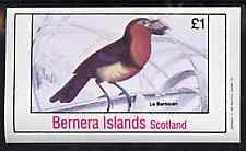 Bernera 1981 Birds #37 imperf souvenir sheet (�1 value) unmounted mint