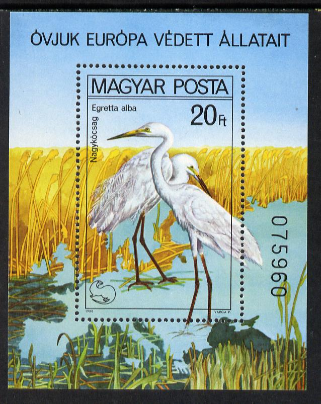 Hungary 1980 Protected Birds perf m/sheet (Egrets) unmounted mint, SG MS 3346, Mi BL 146