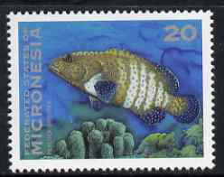 Micronesia 1993-96 Grouper 20c unmounted mint, SG 277