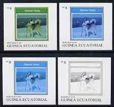 Equatorial Guinea 1977 Dogs EK8 (Siberian Husky) set of 4 imperf progressive proofs on ungummed paper comprising 1, 2, 3 and all 4 colours (as Mi 1132)