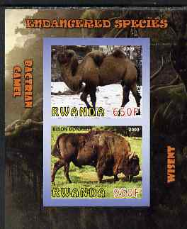 Rwanda 2009 Endangered Species - Wisent & Camel imperf sheetlet containing 2 values unmounted mint