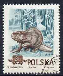 Poland 1954 Eurasian Beaver 3z cto used from Protected Animals set, SG 903, stamps on animals, stamps on beaver