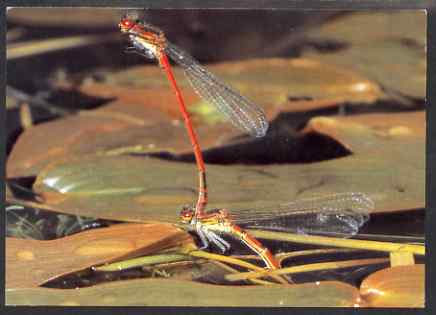 Postcard - Damselfly PPC produced by National Postal Museum unused and fine
