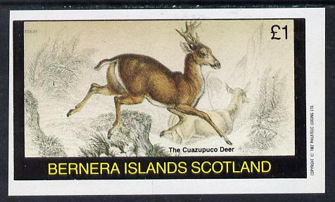 Bernera 1982 Animals (Cuazupuco Deer) imperf souvenir sheet (�1 value) unmounted mint