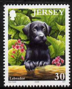 Jersey 2003 Black Labrador Puppy 30p from Pets set unmounted mint, SG 1113