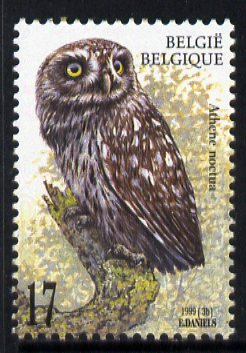 Belgium 1999 Little Owl (Athene noctua) 17f unmounted mint SG 3478, stamps on birds, stamps on birds of prey, stamps on owls