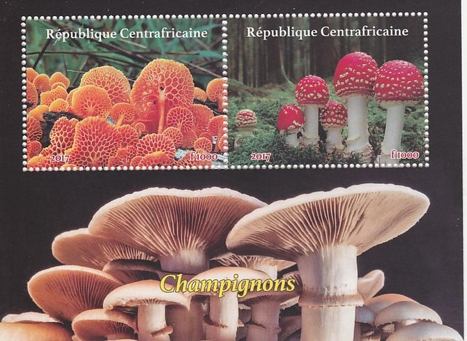 Central African Republic 2017 Fungi perf sheetlet containing 2 values unmounted mint. Note this item is privately produced and is offered purely on its thematic appeal